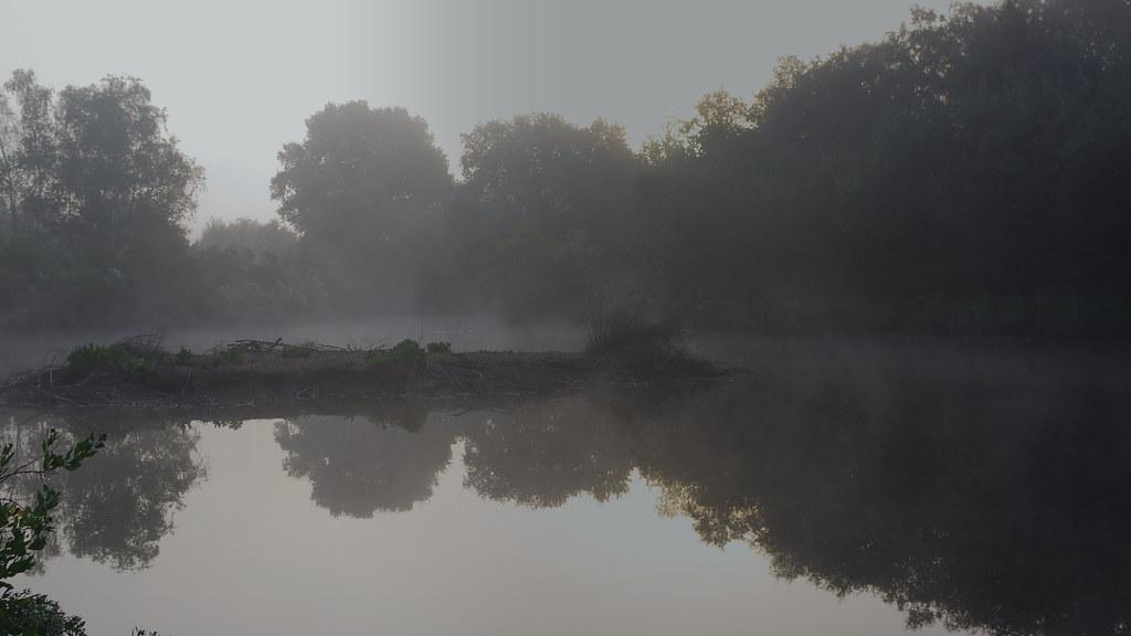 Sortie Réserve Ornithologique du Teich - 21 octobre 2018 31652458468_8efa51c035_b