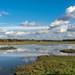 Burton Mere wetlands - RSPB