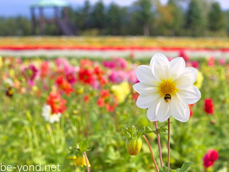 th_flowerland01