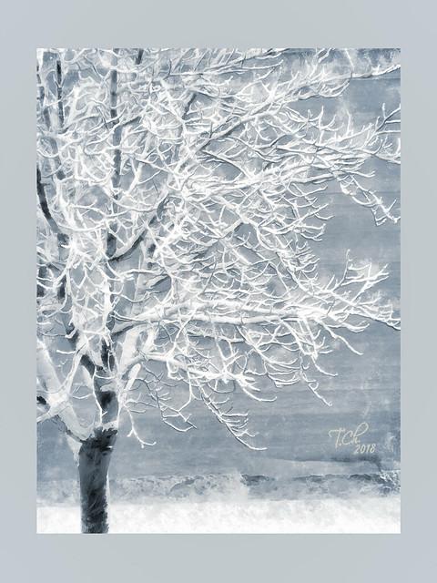 Дерево. Декабрь / Tree. December