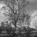 moorland by vertblu