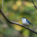 Nuthatch with the beginning of fall peaking through