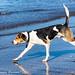 our hound
