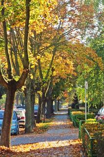 Autumn street :)