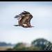 Andover Hawk Conservancy Trust PM-1.jpg
