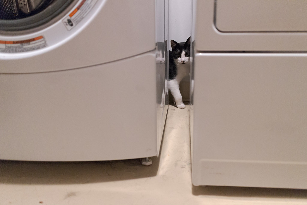 Our kitten Boo hiding behind the washer and dryer