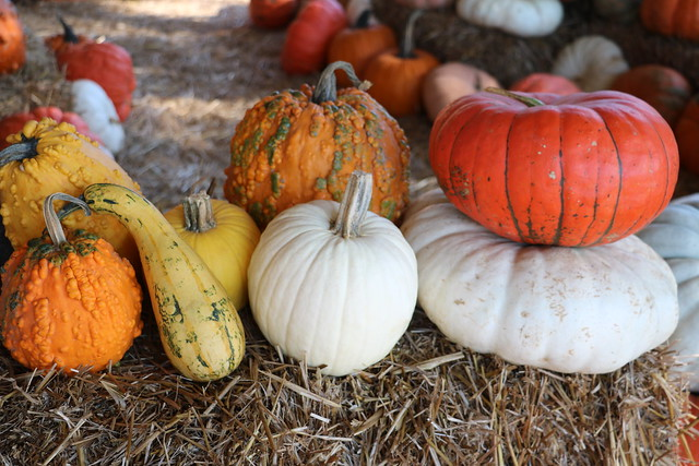 Penton Farm Pumpkin Patch Visit