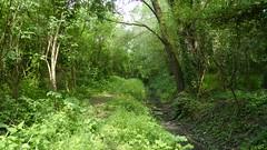 RNR du marais de Wagnonville (17)