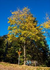 Herbstbaum mit Crosser