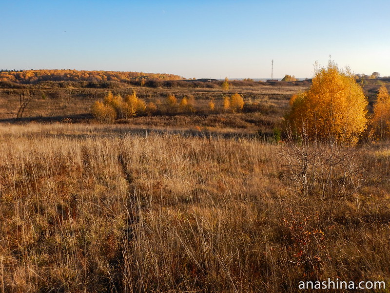Изуродованное поле, Протасово, Московская область