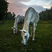 Nashalina Schrape_Hoof Thrower-3102 by nashalina schrape