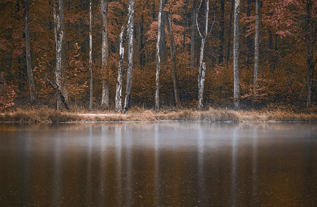 Mist over lake reflections
