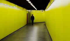 [ Il miglio giallo - The yellow mile ] DSC_0658.R5.jinkoll