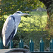 Heron - Myton Fields (55)