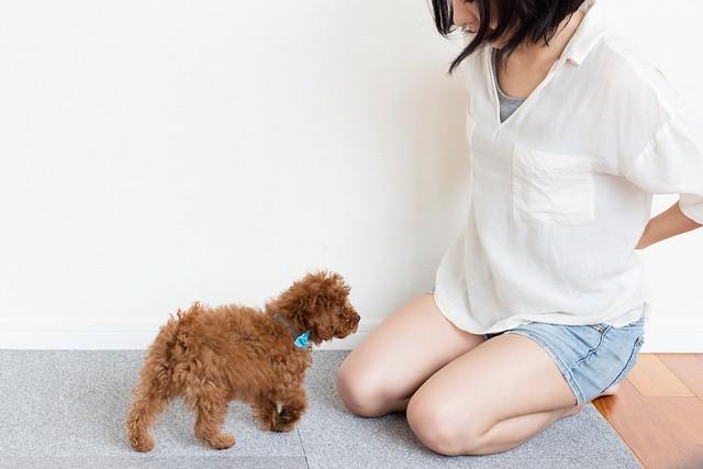 おすわりをうまくいく教え方で練習している犬