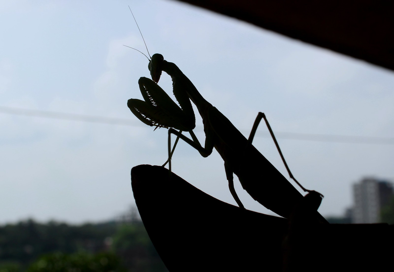 Mantis, Canon EOS KISS X7I, Canon EF-S 18-55mm f/3.5-5.6 IS II