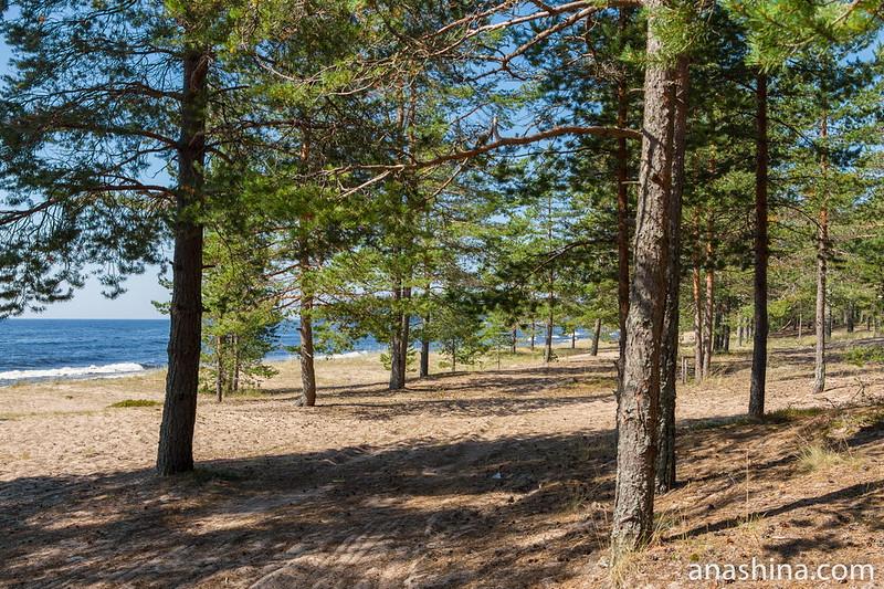 Песчаный пляж на восточном берегу Ладожского озера недалеко от Видлицы