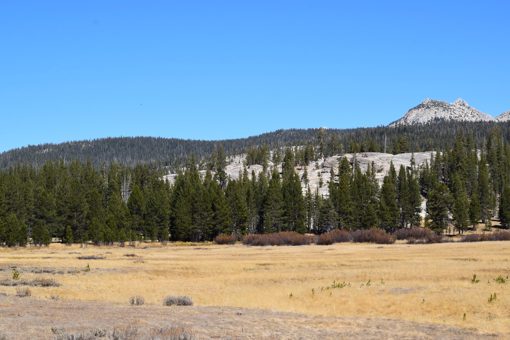 Tuolumne Meadows Yosemite NP on the road to Tioga Pass