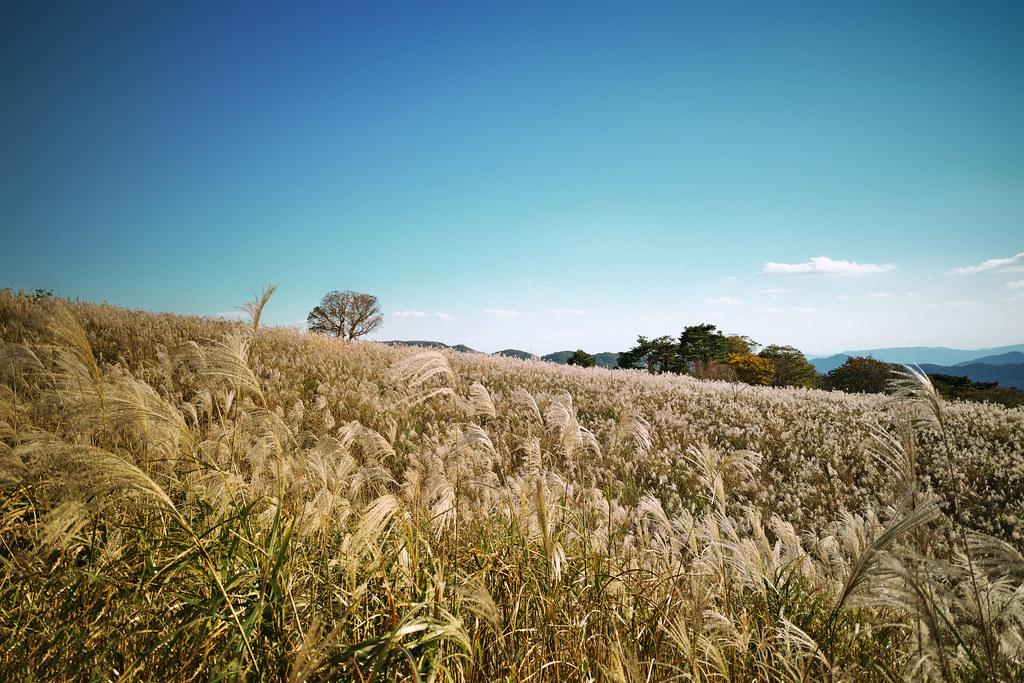 pampas hill