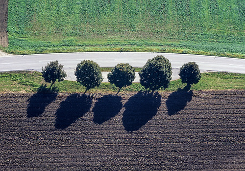 Trees In A Row - 07
