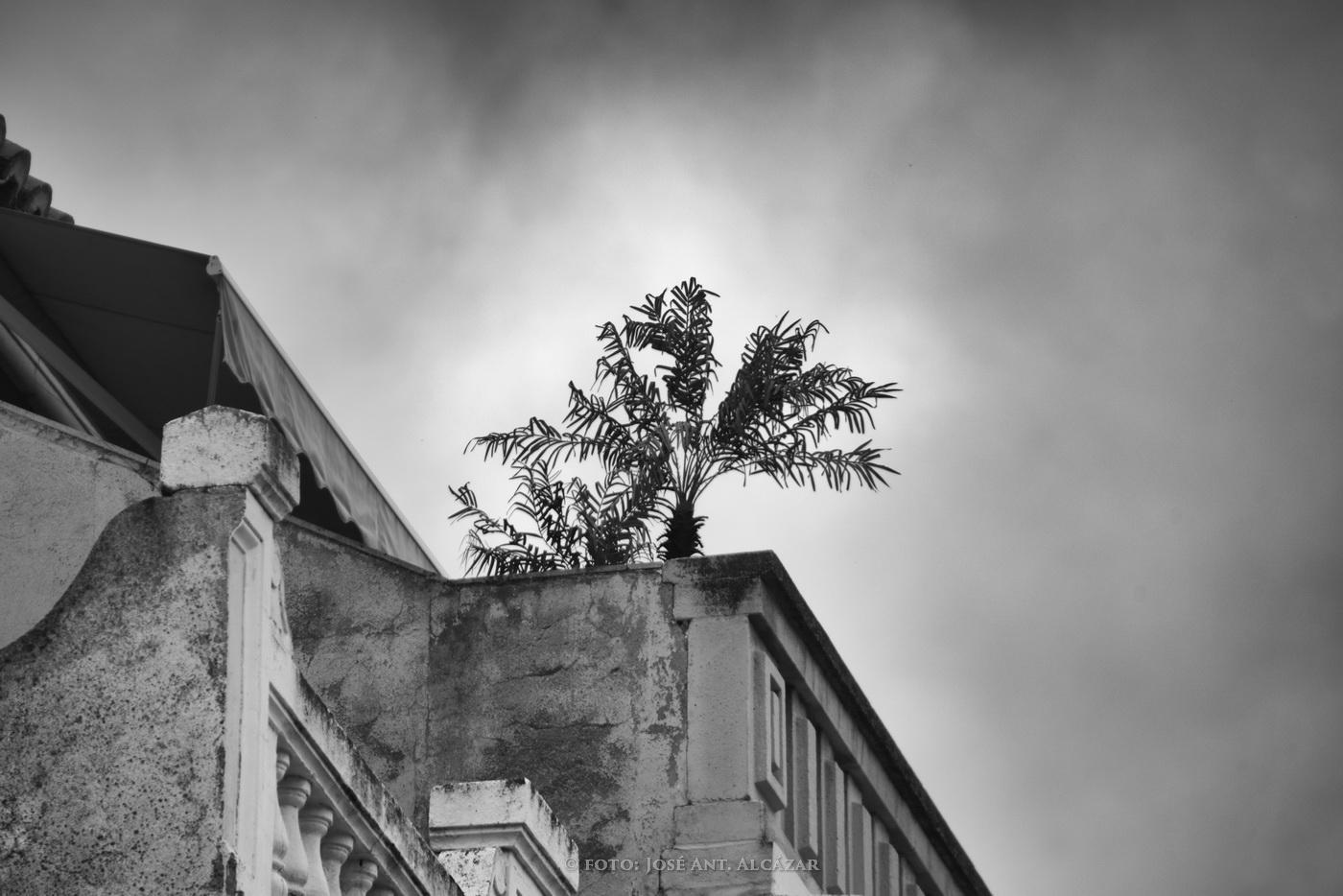 Ático  de un edificio con una palmera