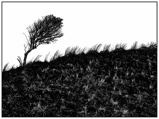 Norderney, windswept tree