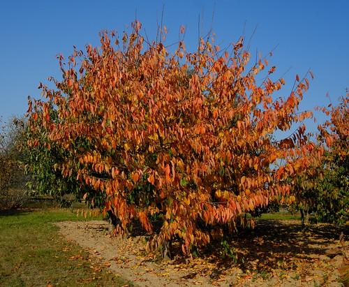 Jesień - Autumn DSCF8594.jpg silky