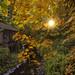 Golden Autumn. by Sveta Imnadze