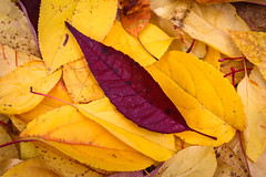 Fall Colors by Liesl-2
