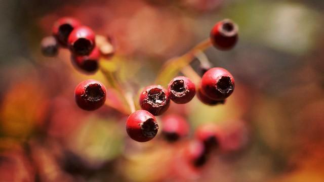 Old berries