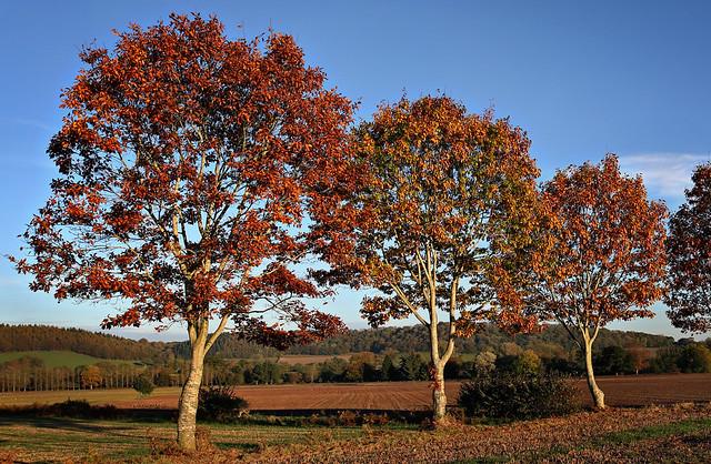 Autumn Oak's