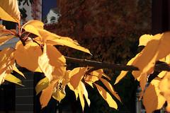 Herbst (02)