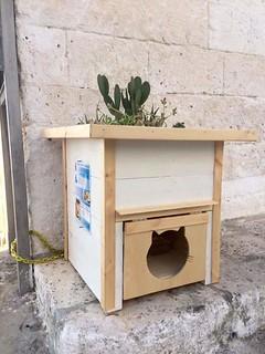 La casetta dei gatti a Ostuni