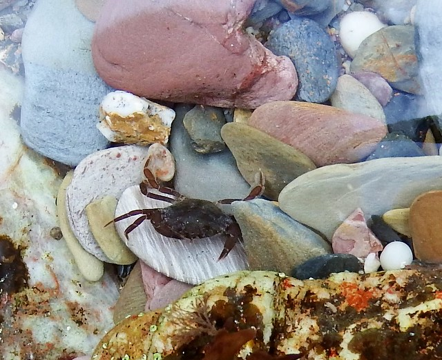Crab in rock-pool, Fujifilm FinePix S1