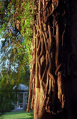 "Cincinnati - Spring Grove Cemetery & Arboretum ""DeCastro Memorial At Bald Cypress Tree"""