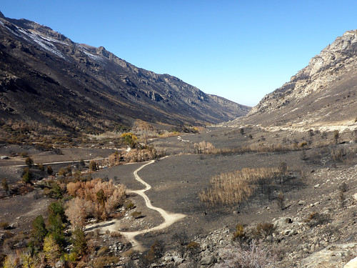 rubymountains eastern nevada fall autumn leaves color lamoillecanyon wildfire fire burned desolation