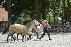 2018.06.21.129 HARAS du PIN - Toma et ses chevaux  de la Cie Atao - Photo of Saint-Germain-de-Clairefeuille