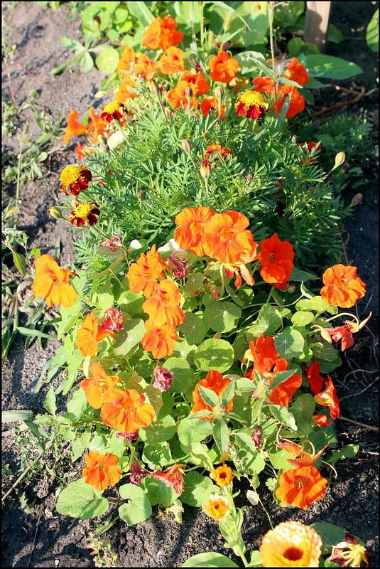 Касарги 3762 Flores
