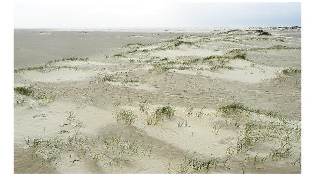 de Hors Texel, Nikon COOLPIX P90