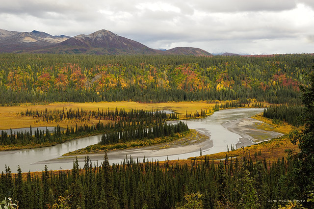 Nenana River, Autumn