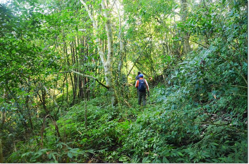 小林山登山步道 2