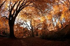 Danestone Country Park,