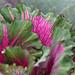 Brassica beauty!