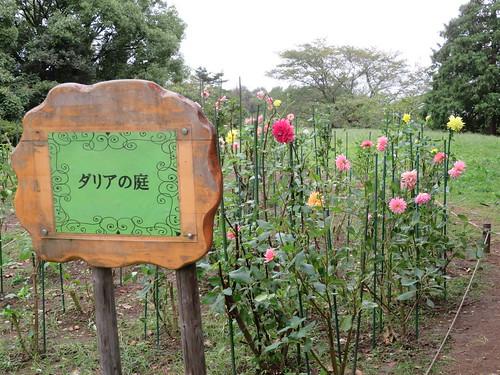 昭和記念公園 ダリアの庭