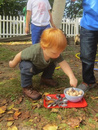 scooping acorns