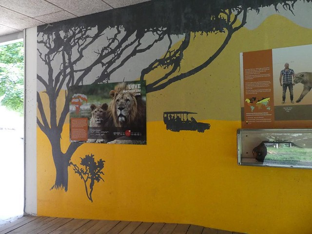 Löwenanlage, Zoo Givskud