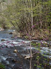 IMGPJ06452C_Fk - Great Smoky Mountain National Park