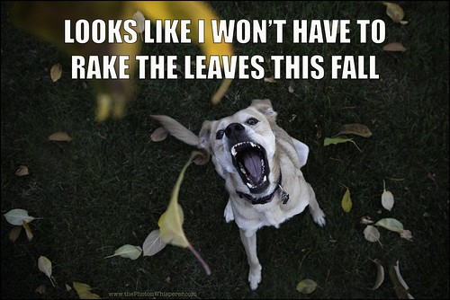 Looks like I won't have to rake the leaves this fall.