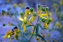 sweet sweet nectar