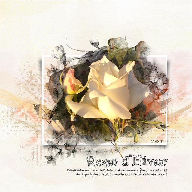 Rose d